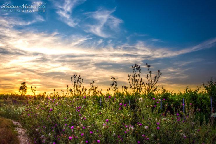 20140802_Wildblumen